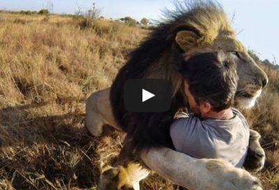 Lev a Afrka na GoPro a iné